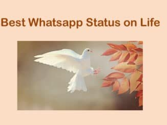 Best whatsapp status on life